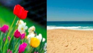 İlkbaharda Yaza Hazırlık Diyeti