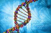 Tüp Bebek Tedavisinde Genetik Risk Taşıyanlar