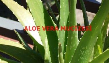 Sivilce Dehası Aloe Vera Kürü