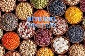 Bitkisel Protein ile Bir Haftada 3 Kilo